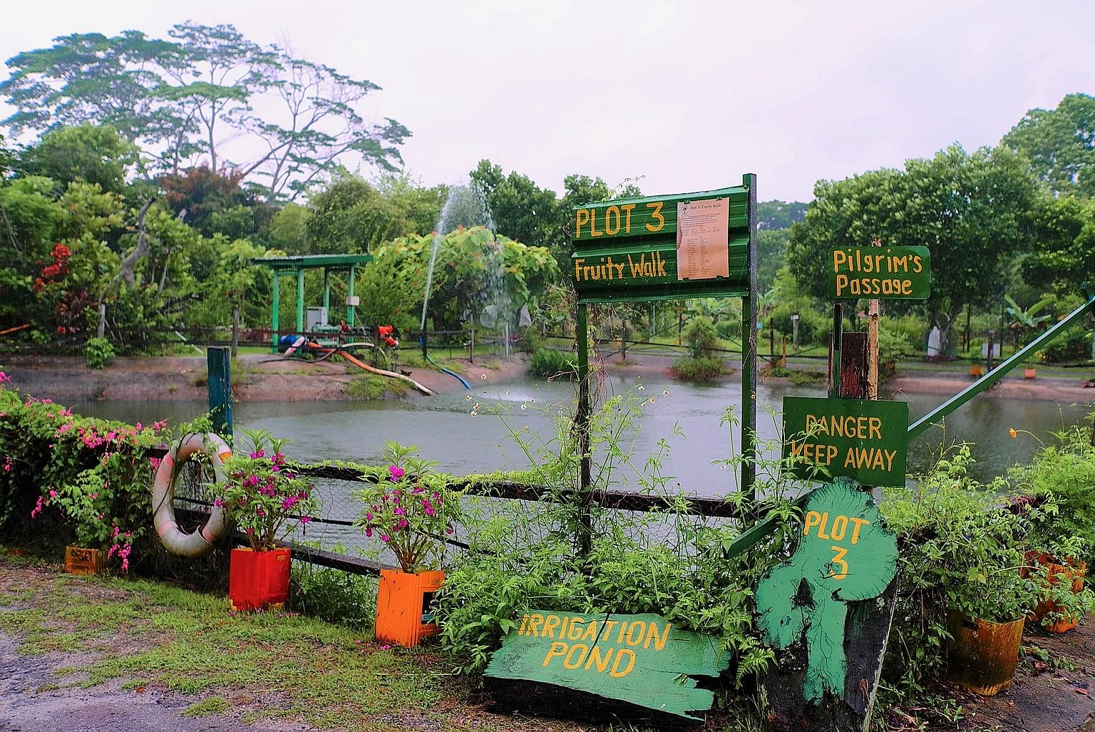 Bollywood Veggies' green initiatives, Singapore News - Tabla