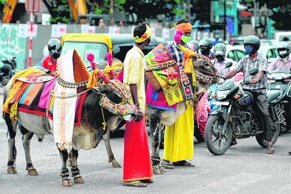 பூம்பூம் மாடு மூலம் சென்னையில் கொரோனா விழிப்புணர்வு பிரசாரம்